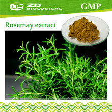 Free sample Rosmarinic Acid for Nutritional Supplements,rosemary leaf extract