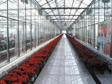 Plástico siembra bandeja por efecto invernadero de grande de efecto invernadero fabricante in China