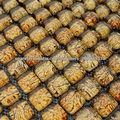 fabricante de baldosa mosaico