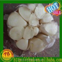 Garlic Importers Garlic Producer Natural garlic