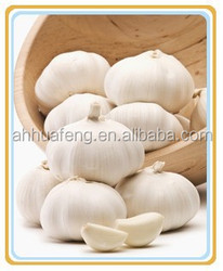 Fresh garlic packed in small mesh packages for wholesale HFS0013