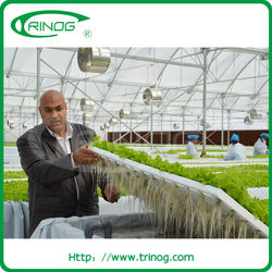 Commercial Greenhouse for agriculture
