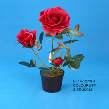 Red potted rose in low price