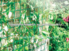 Green shade netting for plant