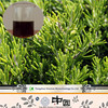hot sale rosemary oleoresin extract 977029-68-7