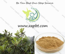 nutritional and natural ursolic acid 10% loquat leaf extract