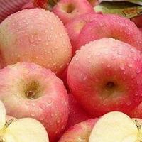 Eco-friendly newest wholesale bulk fresh apples