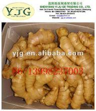 yjg buyer fresh ginger