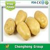 [HOT] fresh potato importers/holland potato price