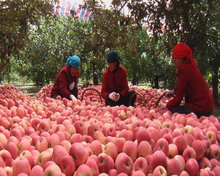 2015 fresh gala apples for sale