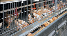 Cheap bird cages/manufacturing bird cage/large bird cage for sale HJ-HC60