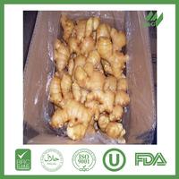 Black ginger price of fresh ginger