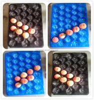 Hot Sale 29x39cm Fruit Thin Plastic Tray
