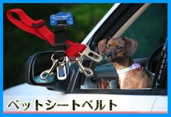 0064# YiWu Winipet China supplier 100%high quality dog leash