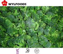 high quality frozen broccoli best price