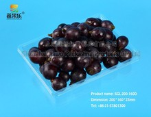 2015 high quality eco friendly square box fruit container SGL-200-160D