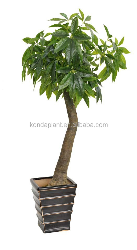 Artificielle dracaena fragrans artificielle dolyscias for Plantes artificielles occasion