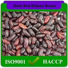 vermelho escuro speckled feijão também chamado de feijão rajado ou açúcar feijão forma longa