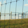 Hot Dipped Galvanized Farm Filed Fence,Cow Wire mesh ,Woven Wire Fence