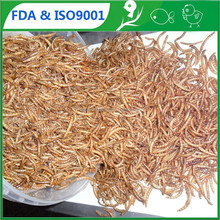 FDA Dried Mealworm For Fish & Reptile // bulk chicken feed for sale