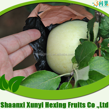 fresh fruits and vegetables importers