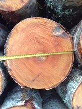European Birch logs