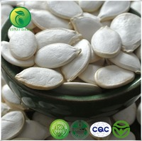 Export Products Pumpkin Right /Snow White Pumpkin Seeds 13cm