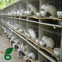 best Selling Good Quality rabbit cages design