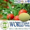 Natural Ashwagandha extract/Ashwagandha powder/withanolides 5% Free sample