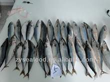 Best Price Frozen Mackerel