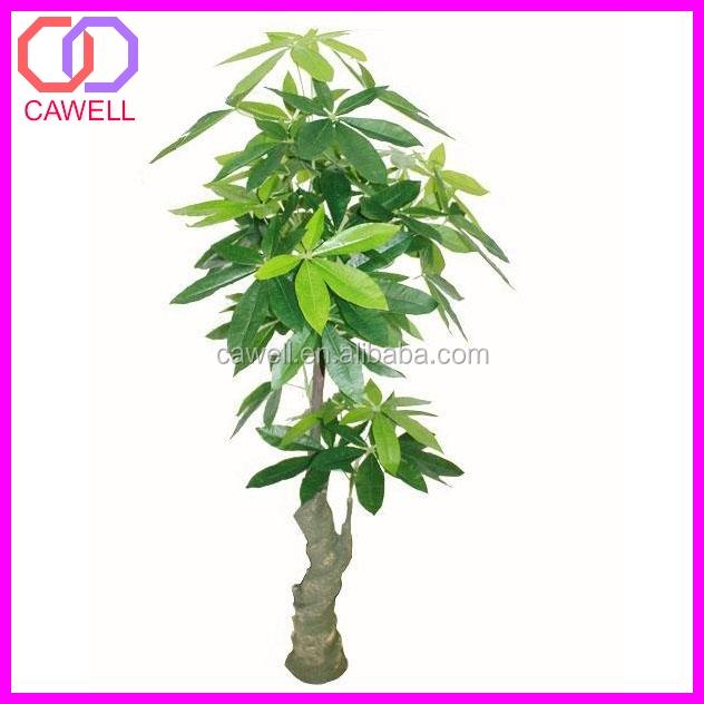 Types Of Ornamental Plants Buy Types Of Ornamental