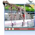 tamanho real do dinossauro esqueleto fóssil para o museu dos dinossauros