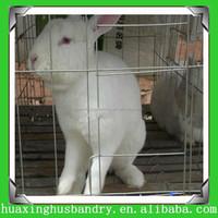 rabbit farm for sale