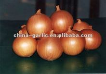 Fresh Onion For Sale To Germany/UK Market