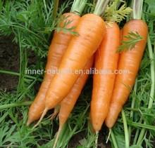 100% natural extracto de zanahoria