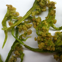 Health and fresh vegetables for dehydrated green cauliflower