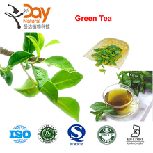 2015 Natural High Quality Green Tea Extract