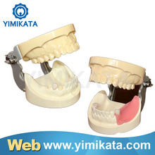 Promotion Yimikata One-stop Online store Teaching Model Long Warranty Portable Implant practice model