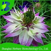 GMP factory supply black caraway seed extract