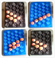 Zhentao plastic PP fruit tray/apple packing tray