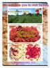 bulk dried goji berry, organic goji berry150/160/180/220/280