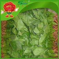 China Frozen Fresh Spinach, best price spinach