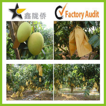 High quality fruit protective paper bag for mango