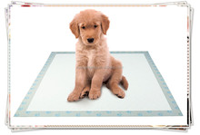 super absorbent pet heating pads