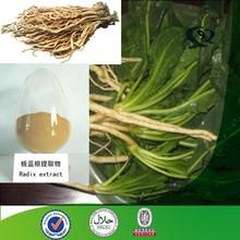 High quality Medical Isatis root Extract Powder,radix isatidis Powder.Isatis tinctoria L
