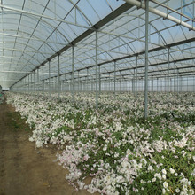 High Quality ISO Certification Bayer polycarbonate hollow sheet commercial green house commercial greenhouse for sale
