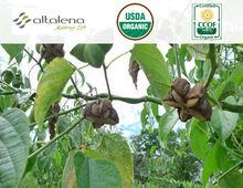 Sacha Inchi Dry Extract 8-10% natural Caffeine