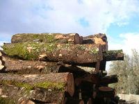 Olive wood logs
