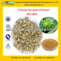 GMP Manufacturer Supply High Quality Tribulus Terrestris Fruit Extract