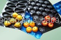 economical eco-friendly plastic pp fruit tray kiwi packing tray with high quality